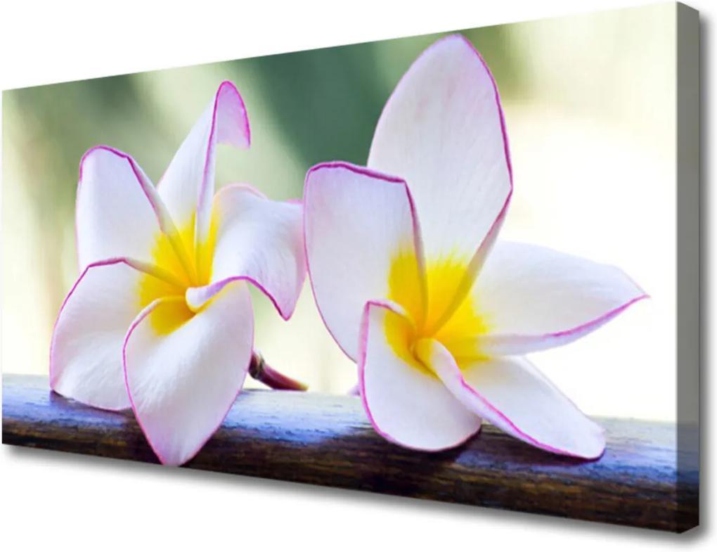 Obraz Canvas Květiny plátky plumérie