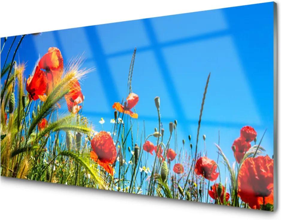 Plexisklo obraz Květiny máky pole trávy