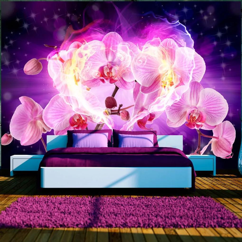 Fototapeta - Orchids in flames 400x280