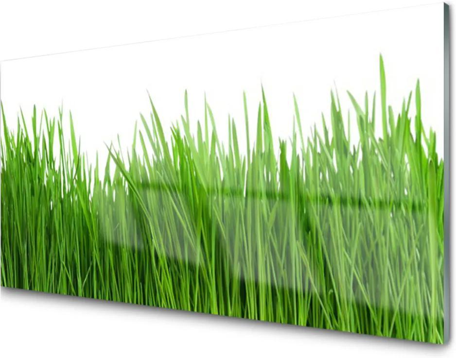 Obraz na skle Tráva rostlina příroda