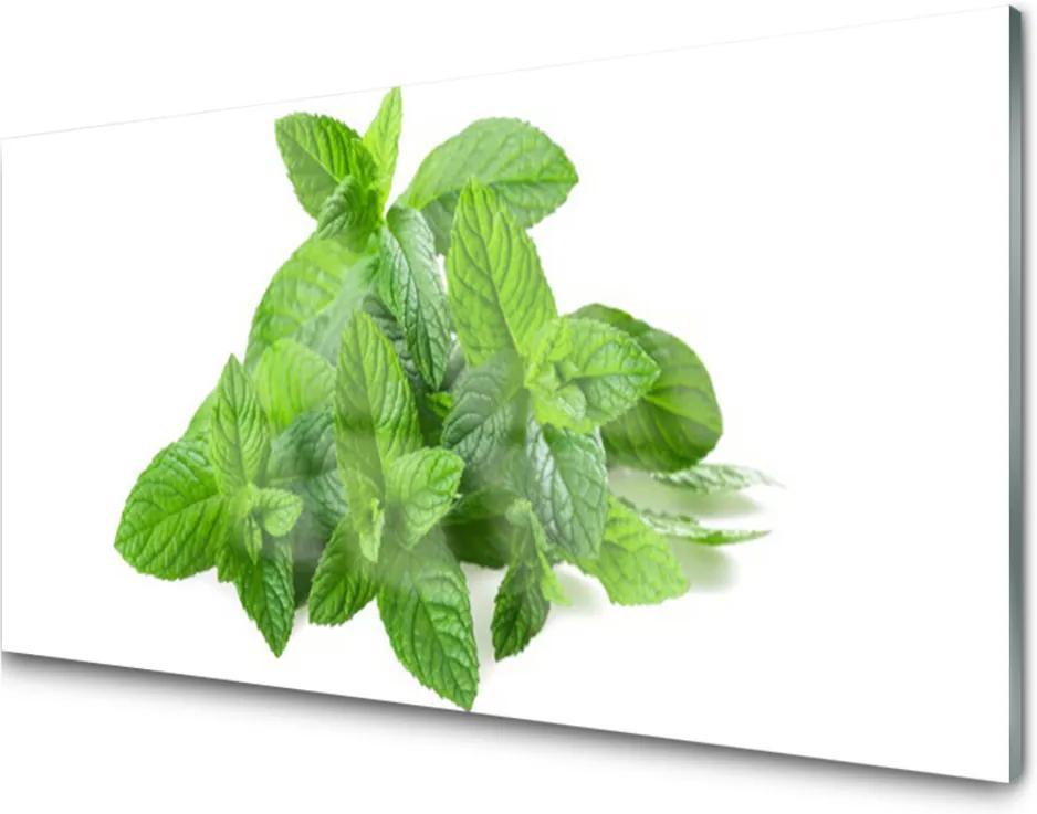 Obraz plexi Mäta Rastlina Príroda