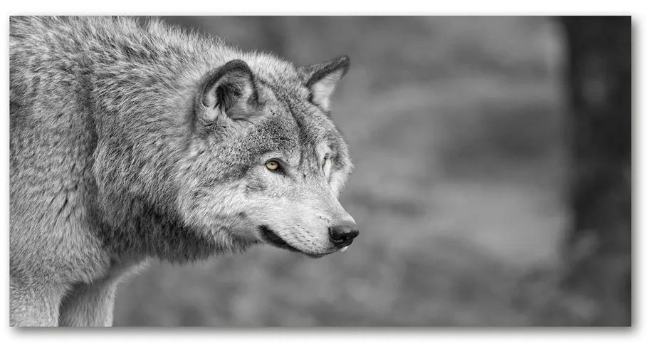 Moderný obraz fotografie na akrylu Sivý vlk pl-oa-140x70-f-125421387