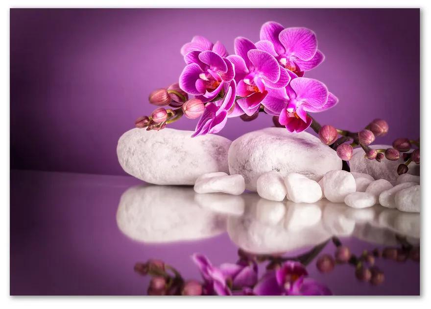 Foto obraz sklo tvrdené Ružová orchidea pl-osh-100x70-f-82457632