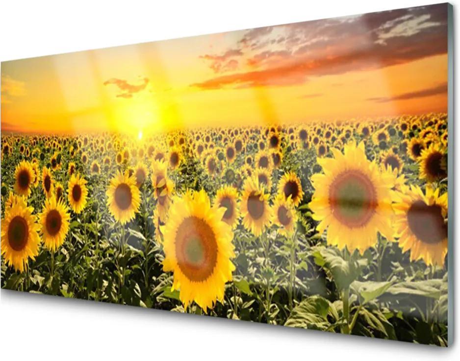 Obraz na skle Skleněný slunečnice