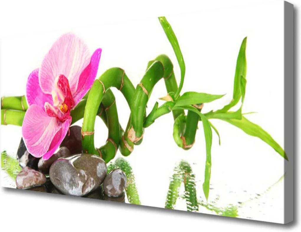 Obraz na plátně Kvet Rastlina Príroda