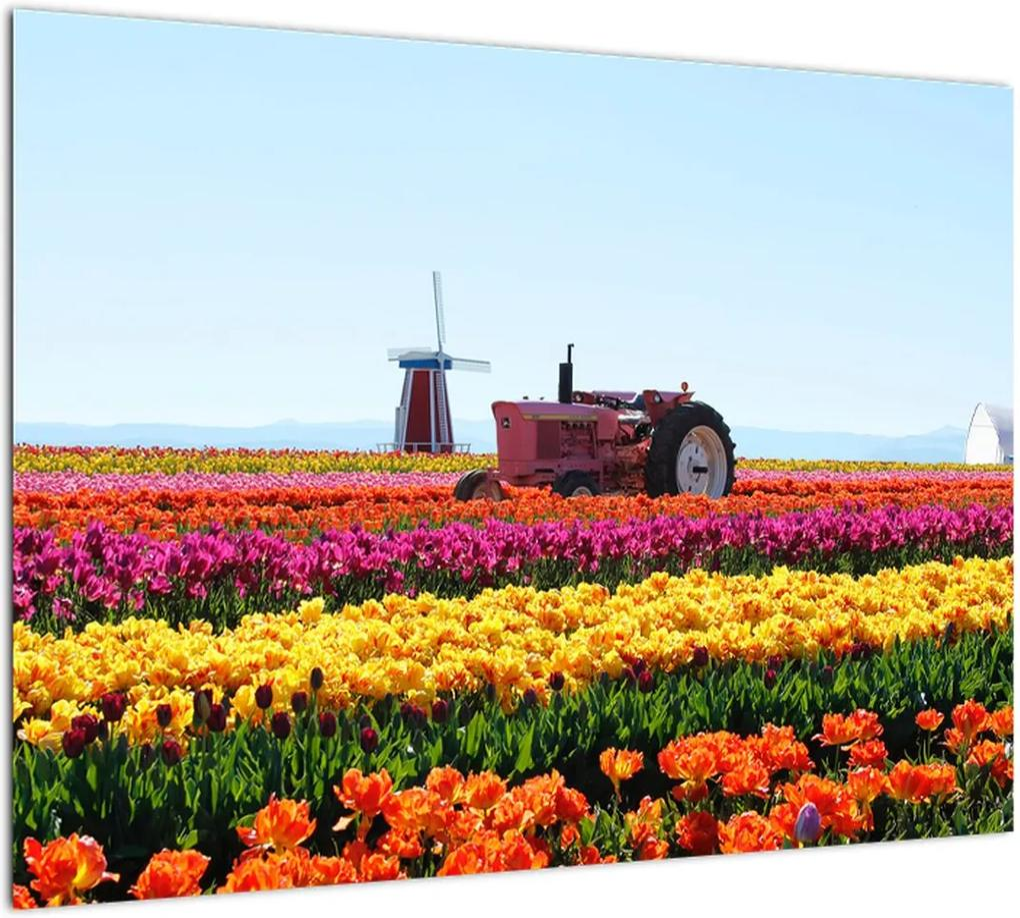 Obraz tulipánové farmy (70x50 cm), 40 ďalších rozmerov