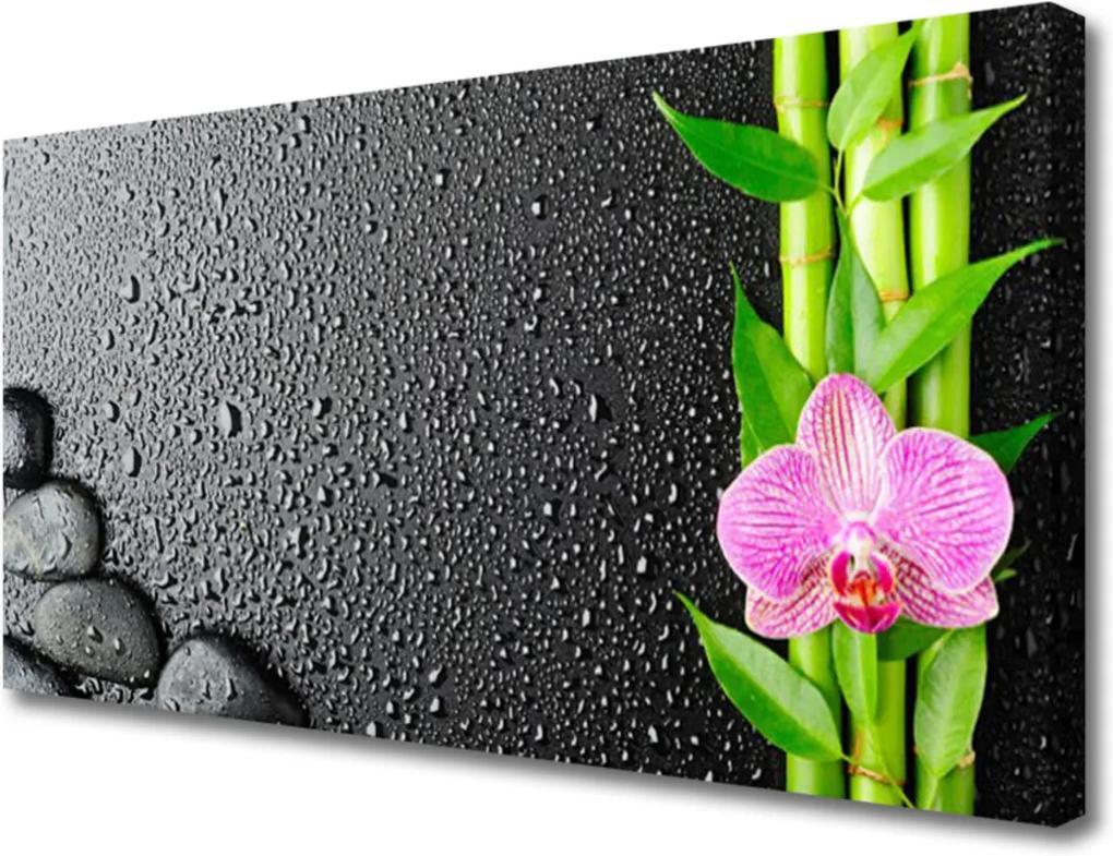Obraz Canvas Bambus stonek květ rostlina