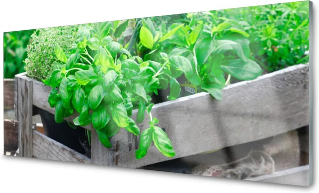 Obraz na skle Listy příroda rostlina