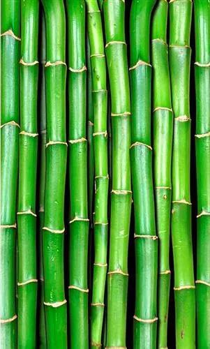 Vliesové fototapety, rozmer 150 cm x 250 cm, bambus, DIMEX MS-2-0165