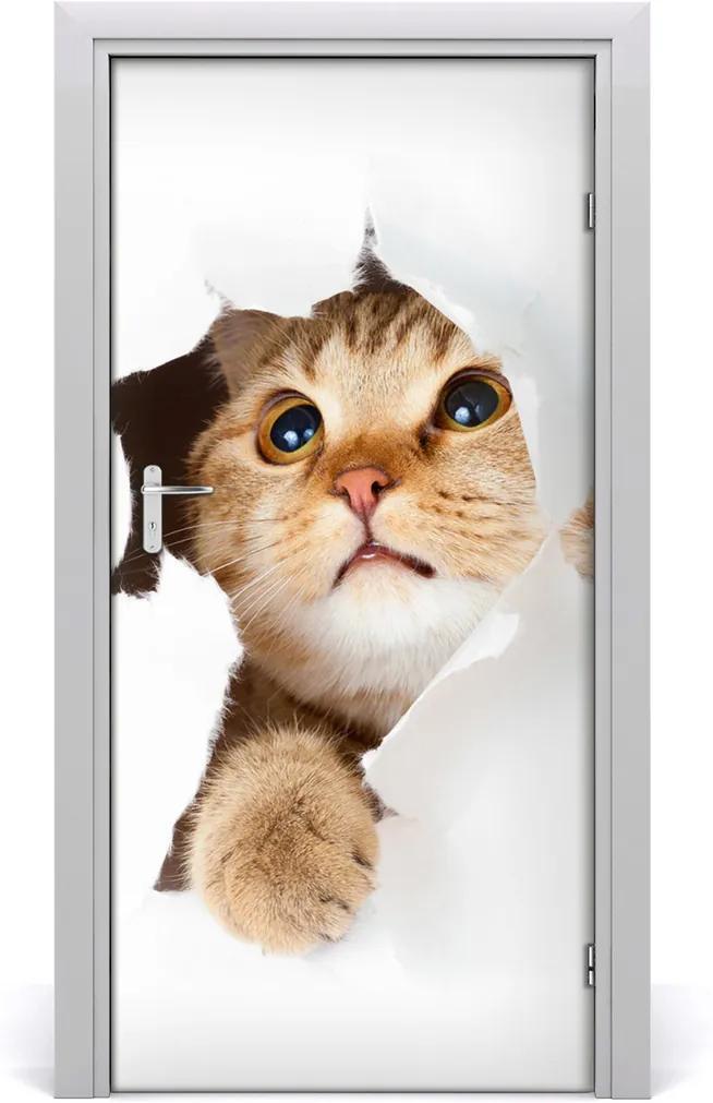 Samolepící fototapeta na dveře Ścianę kot