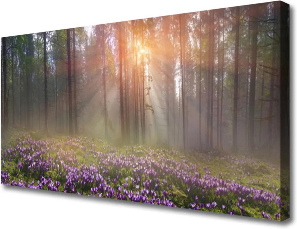 Obraz na plátně Les Kvety Rastlina Príroda