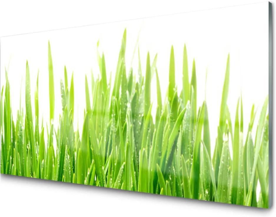 Skleněný obraz Tráva Rastlina Príroda
