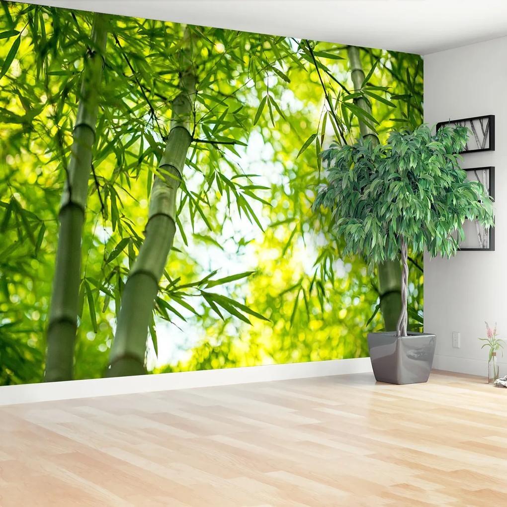 Fototapeta Bambusové větve