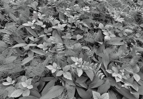 Fototapety, rozmer 368 x 254 cm, rastliny, Komar 8-914