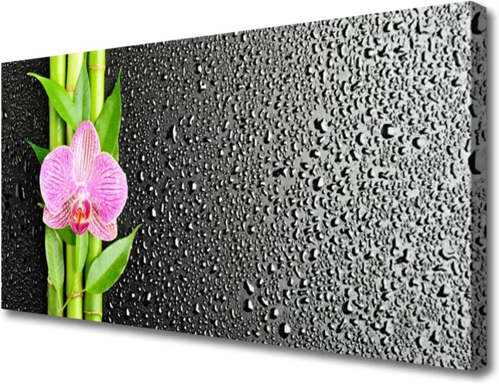 Obraz na plátně Bambus stonke květ rostlina