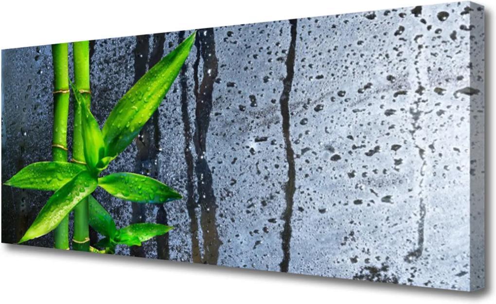 Obraz Canvas Bambus list rostlina příroda