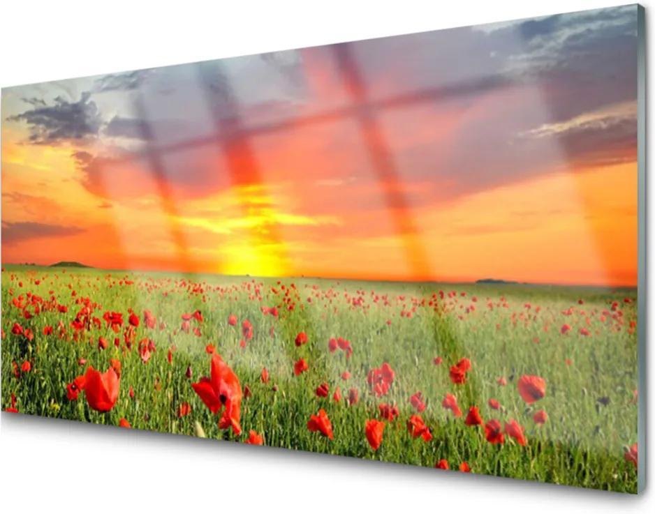 Plexisklo obraz Máky slunce rostlina příroda
