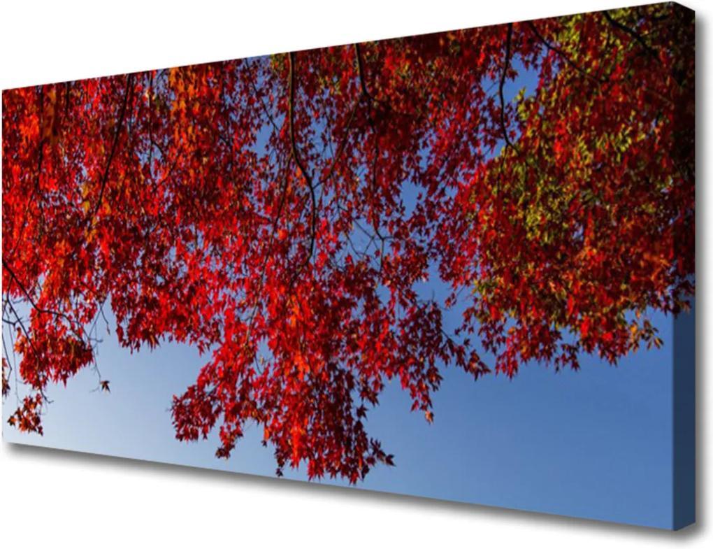 Obraz Canvas Strom listy větve příroda