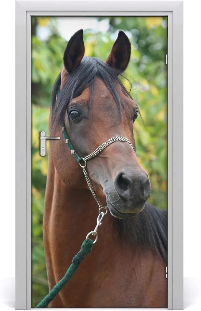 Samolepící fototapeta na dveře Kůň portrét