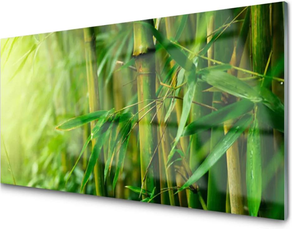 Obraz na akrylátovom skle Bambus Stonky Rastlina