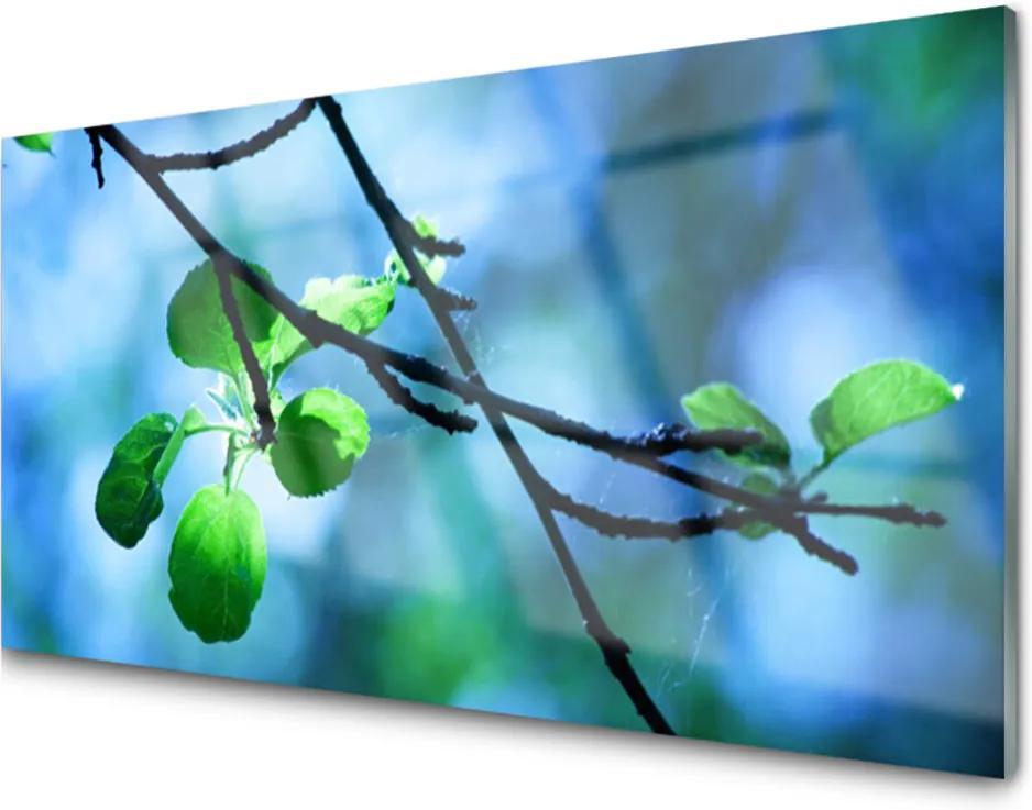 Skleněný obraz Větev Listy Rostlina Příroda