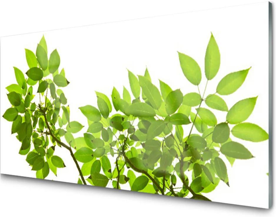Plexisklo obraz Větev listy rostlina příroda