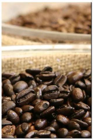Tlačený obraz Plody kávovníka - Puuikibeach 977A_1S