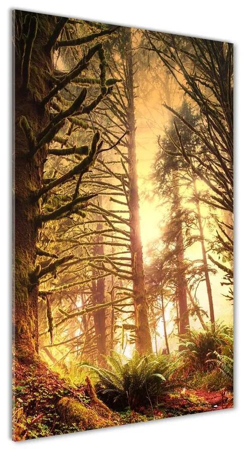 Foto obraz akrylový do obývačky Dažďový prales pl-oa-70x140-f-49624439