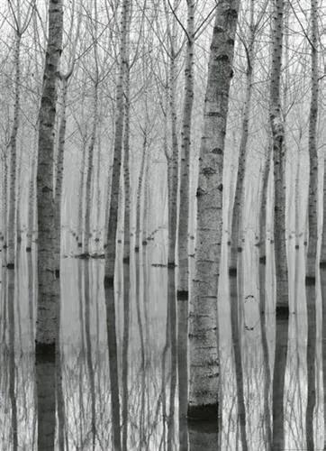 Vliesové fototapety, rozmer 184 x 254 cm, březový les vo vode, W+G 5122-2V-1