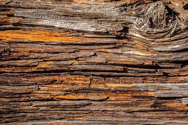Dimex fototapeta Kora stromu XL-541 | 330 x 220 cm