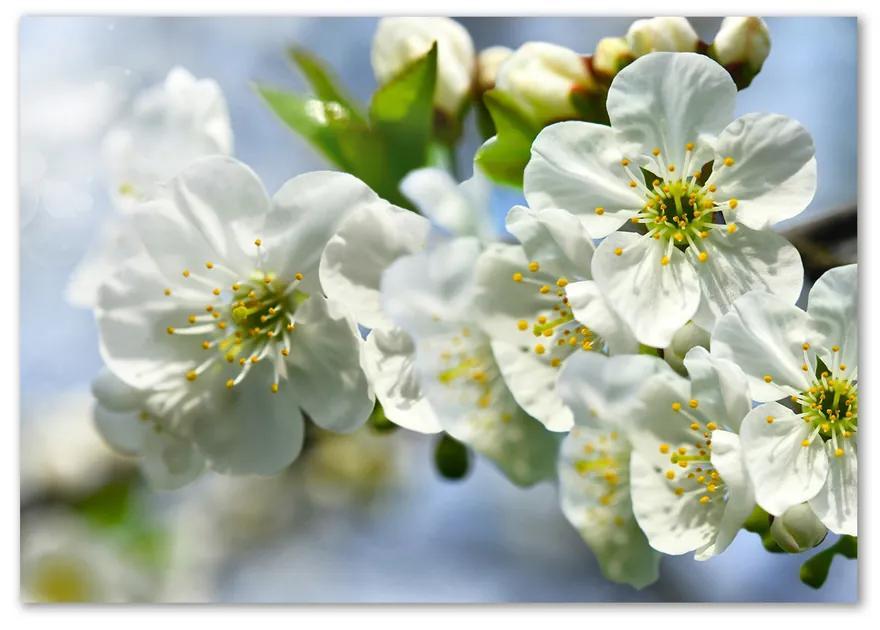 Foto obraz fotografie na skle Kvet višne pl-osh-100x70-f-82566454