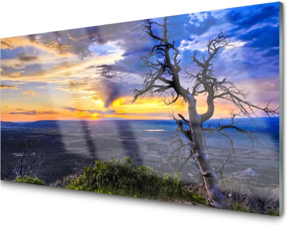 Plexisklo obraz Strom zápas slunce