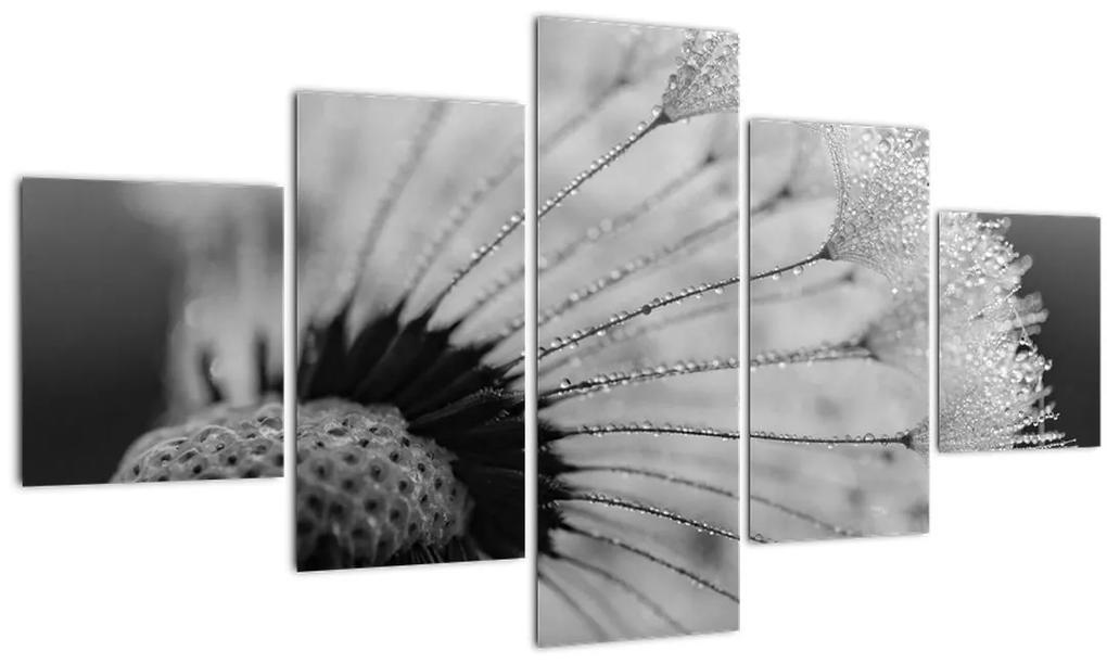 Obraz púpavy - čiernobiely (125x70 cm), 40 ďalších rozmerov