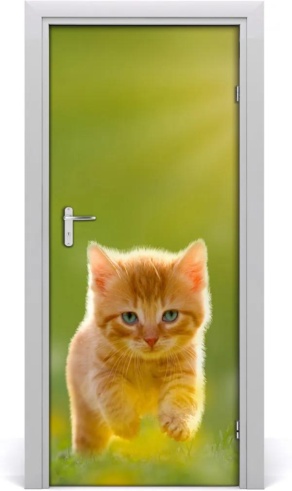 Samolepící fototapeta na dveře Rudá kočka