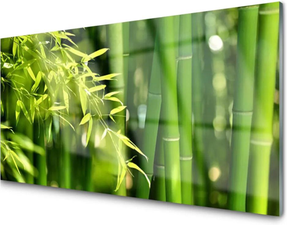Skleněný obraz Bambus Listy Rastlina