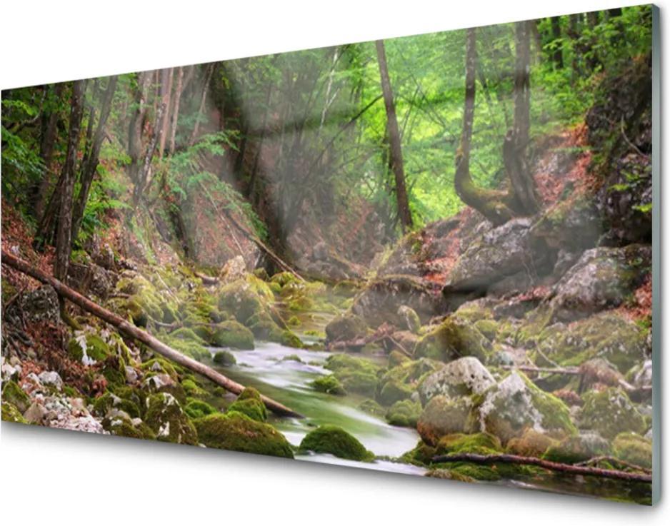 Skleněný obraz Skleněný les mech příroda
