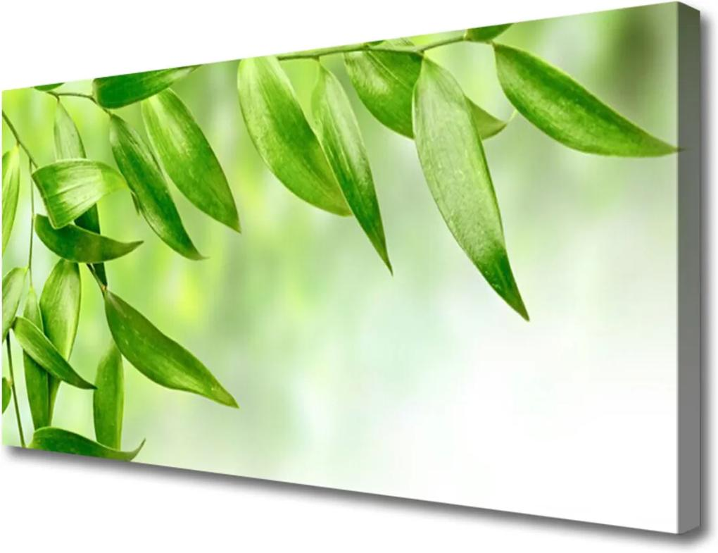 Obraz Canvas Zelené Listy Príroda