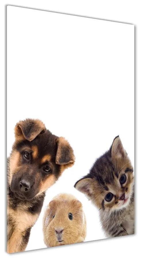 Foto obraz akrylové sklo Domáce zvieratá pl-oa-70x140-f-67306538