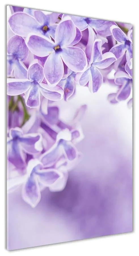 Foto obraz akrylový na stenu Kvety bzu pl-oa-70x140-f-58135324