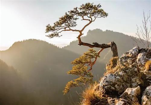 Vliesové fototapety, rozmer 312 x 219 cm, strom na zráze, IMPOL TRADE 10511 VEXXL