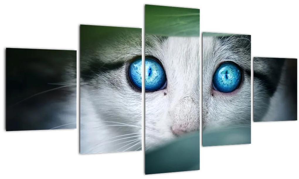 Obraz mačky (125x70 cm), 40 ďalších rozmerov