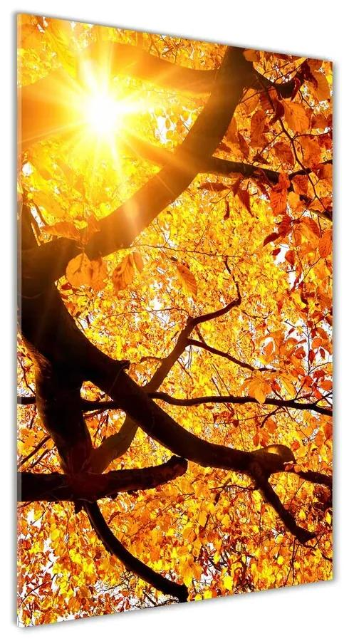 Foto obraz akrylové sklo Jesenný strom pl-oa-70x140-f-89060594