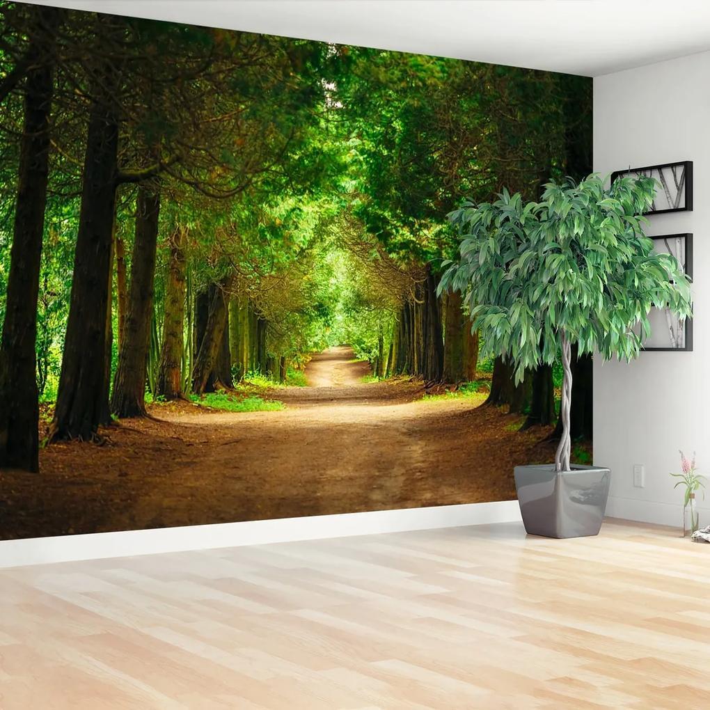Fototapeta chodník stromy
