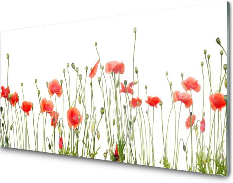 Obraz plexi Maky Rastlina Príroda
