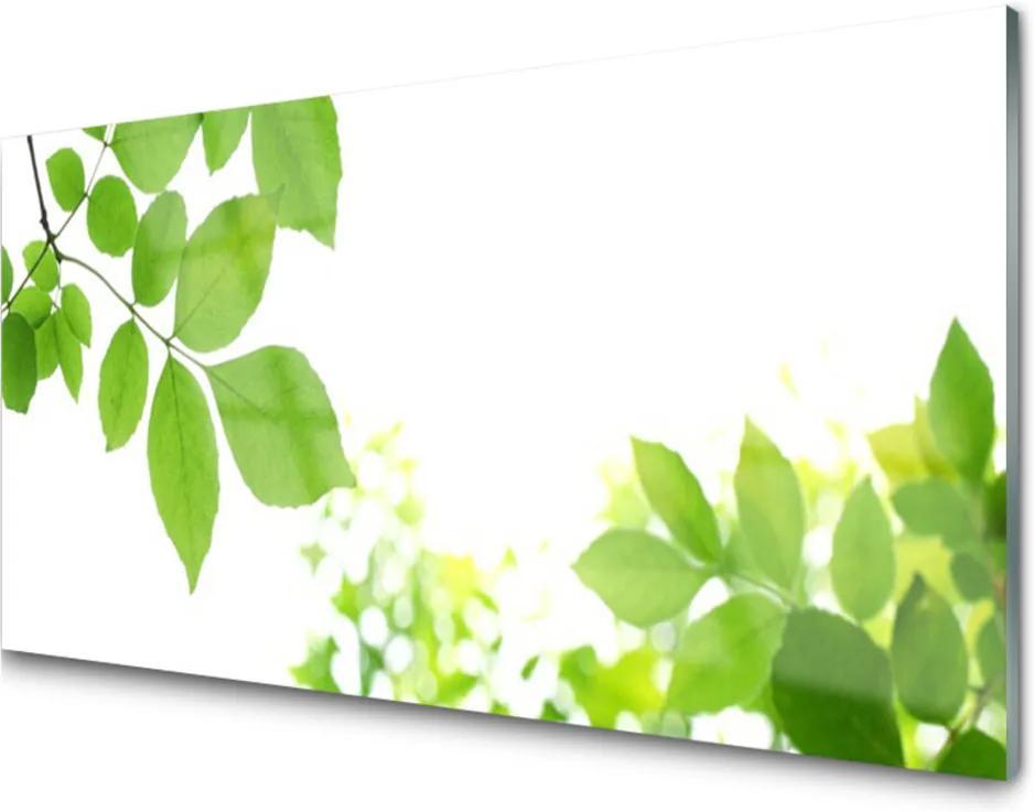 Obraz plexi Plátky Rastlina Príroda