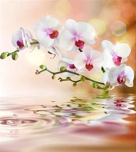 Vliesové fototapety, rozmer 225 cm x 250 cm, biela orchidea, DIMEX MS-3-0147