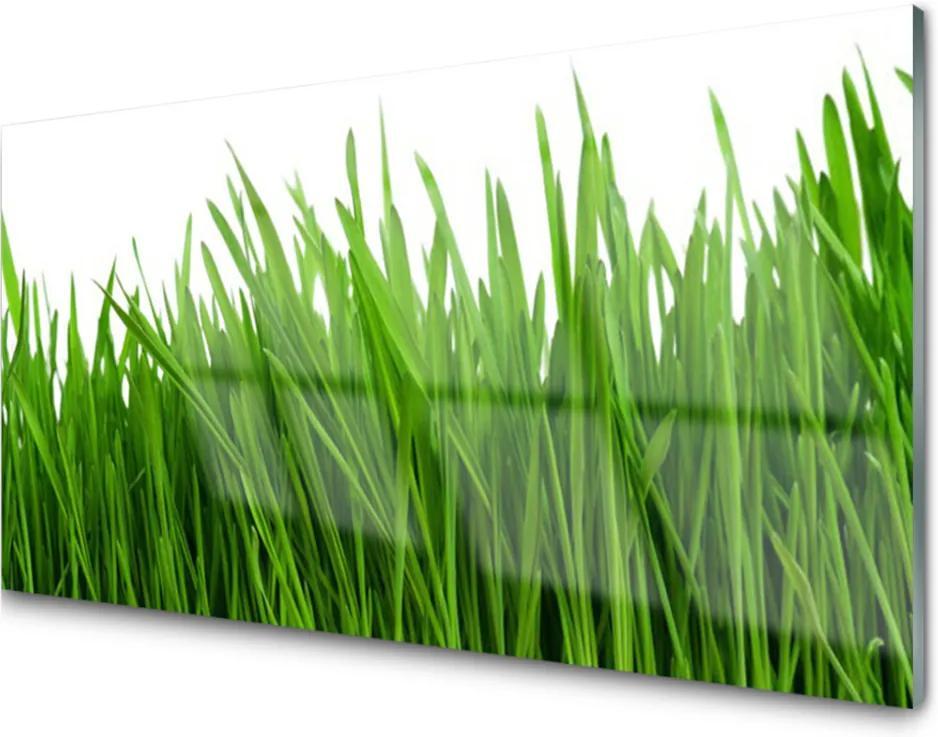 Obraz na skle Tráva Rastlina Príroda