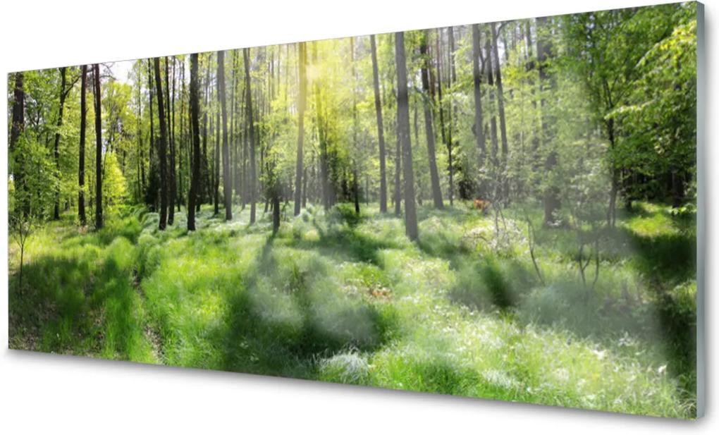 Plexisklo obraz Les tráva rostlina příroda