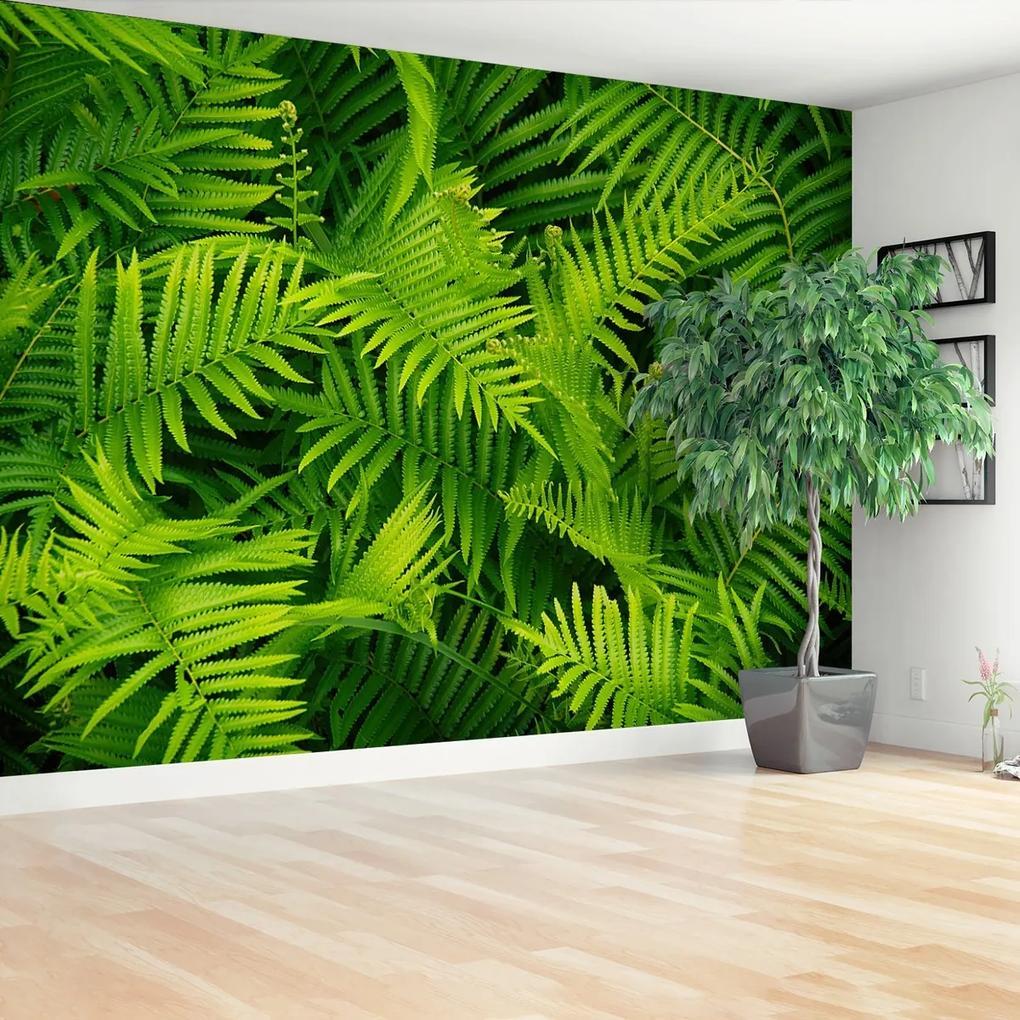 Fototapeta Zelené kapradí
