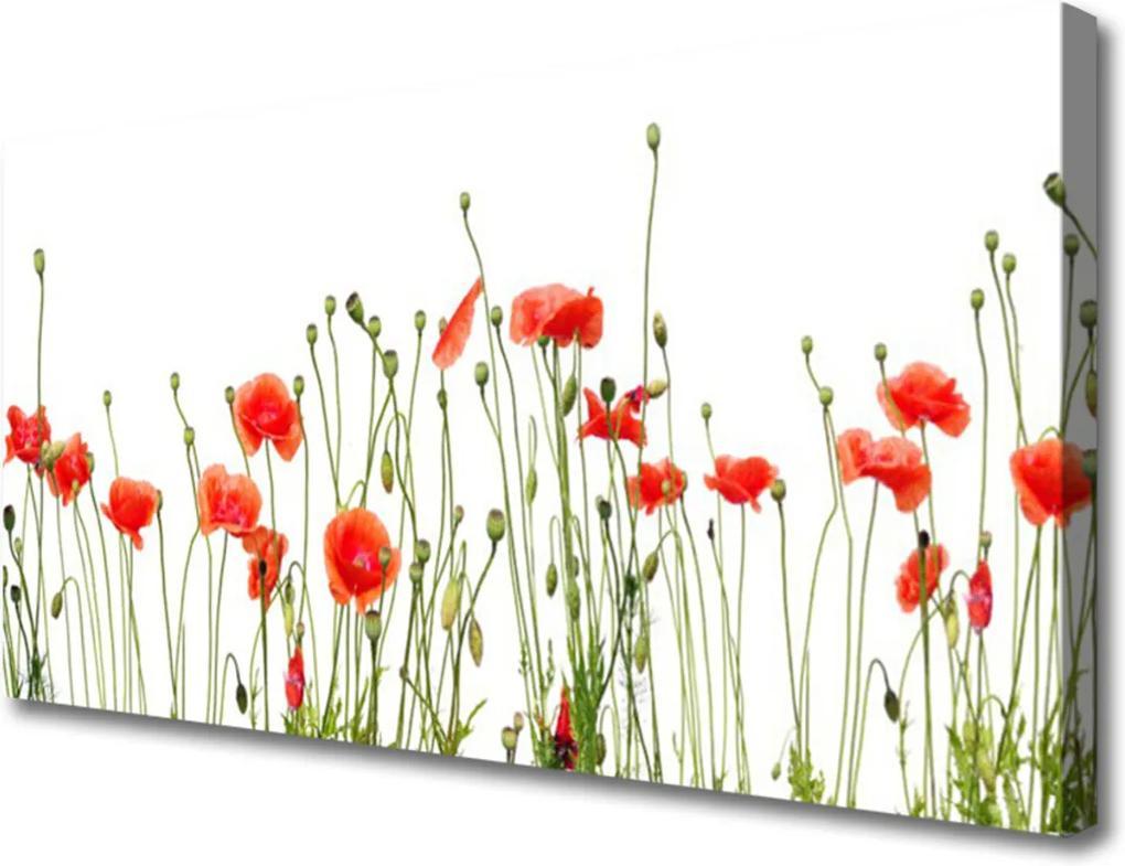 Obraz Canvas Maky Rastlina Príroda